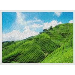 Topný obraz - Zelené plantáže