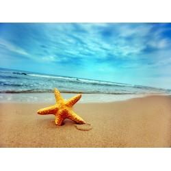 infrapanel - Mořská hvězdice
