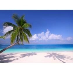 infrapanel - Palmové stíny