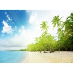 infrapanel - Palmová pláž