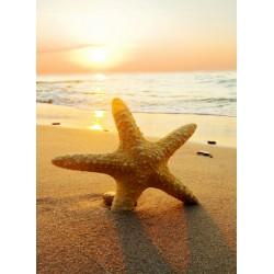 infrapanel - Mořská hvězdice v písku