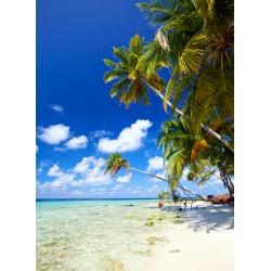 infrapanel - Tropická pláž