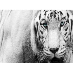 infrapanel - Bílý tygr