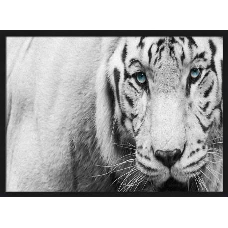 Topný obraz - Bílý tygr