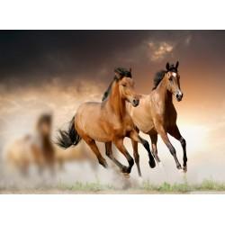 infrapanel - Koně