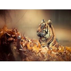 infrapanel - Tygr v listí