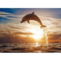 infrapanel - Skákající delfín
