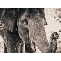 infrapanel - Černobílý slon