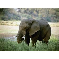 infrapanel - Slon v trávě