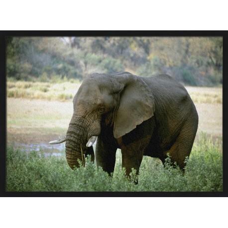 Topný obraz - Slon v trávě