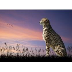 infrapanel - Gepard