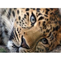 infrapanel - Leopard