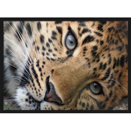 Topný obraz - Leopard