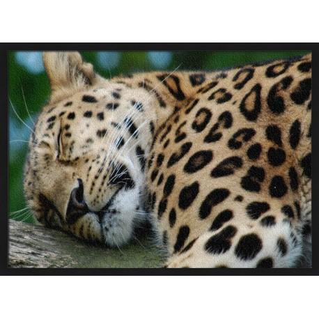 Topný obraz - Spící leopard