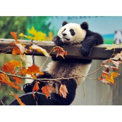 infrapanel - Panda
