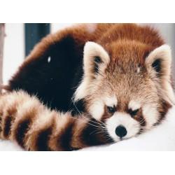 infrapanel - Panda červená
