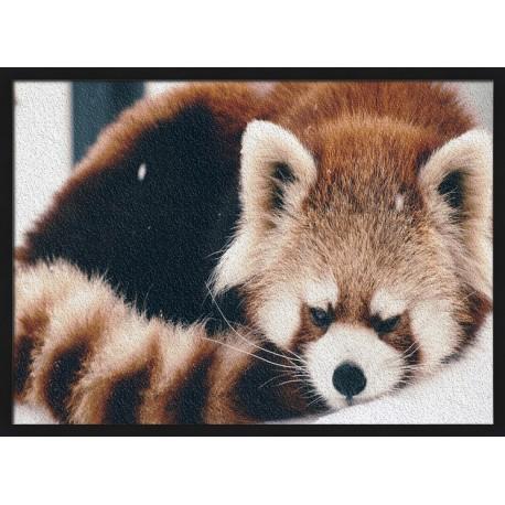 Topný obraz - Panda červená
