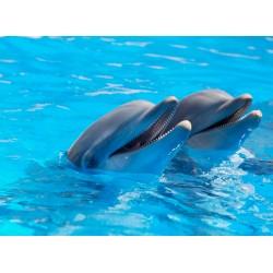 infrapanel - Delfíni