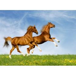 infrapanel - Koně ve skoku