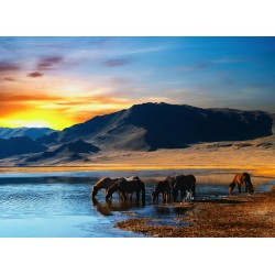 infrapanel - Koně u jezera