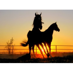 infrapanel - Silueta koní