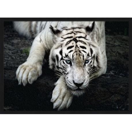 Topný obraz - Ležící bílý tygr