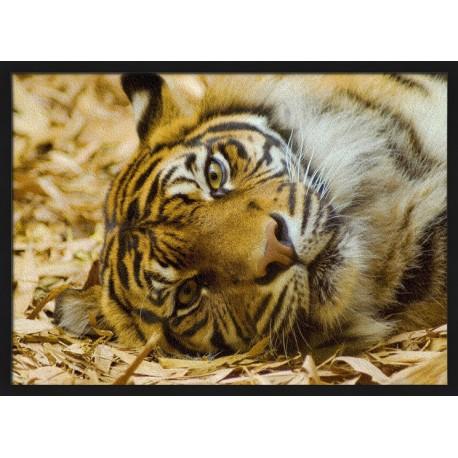 Topný obraz - Ležící tygr