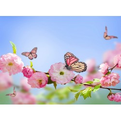 infrapanel - Motýl na květu