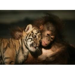 infrapanel - Tygří a opičí mládě