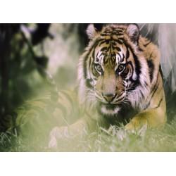 infrapanel - Tygr indický