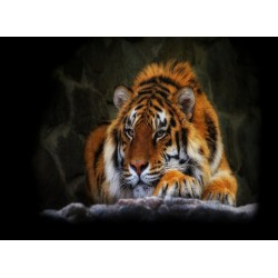 infrapanel - Tygr sumaterský