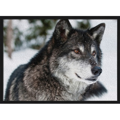 Topný obraz - Vlk kanadský