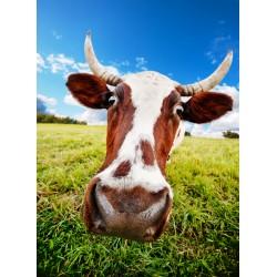 infrapanel - Kráva