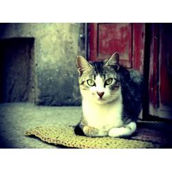 infrapanel - Kočičí pohled