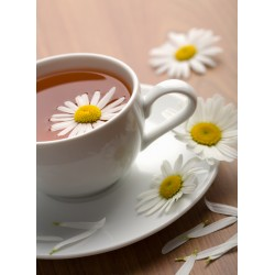 infrapanel - Heřmánkový čaj