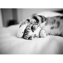 infrapanel - Malé kotě
