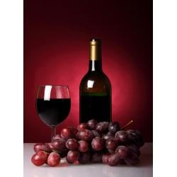 infrapanel - Degustace vína