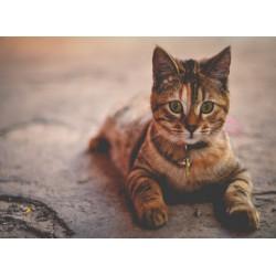 infrapanel - Kočka