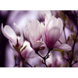 infrapanel - Fialové květy