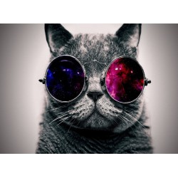 infrapanel - Kočičí guru