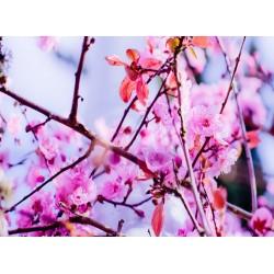 infrapanel - Sakura