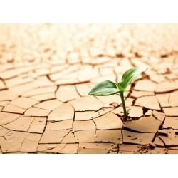 infrapanel - Rostlina v poušti
