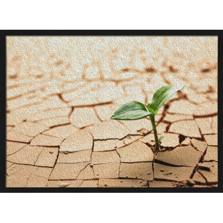 Topný obraz - Rostlina v poušti