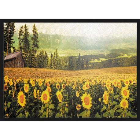 Topný obraz - Pole slunečnic