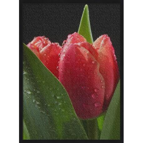 Topný obraz - Orosený tulipán