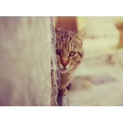 infrapanel - Schovávající se kočka