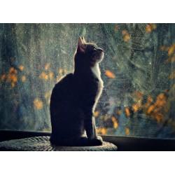 infrapanel - Kočičí silueta