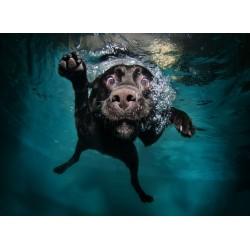 infrapanel - Pes pod vodou