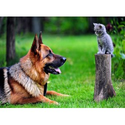infrapanel - Pes a kočka