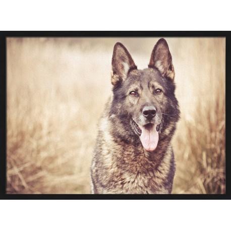 Topný obraz - Pes v obilí